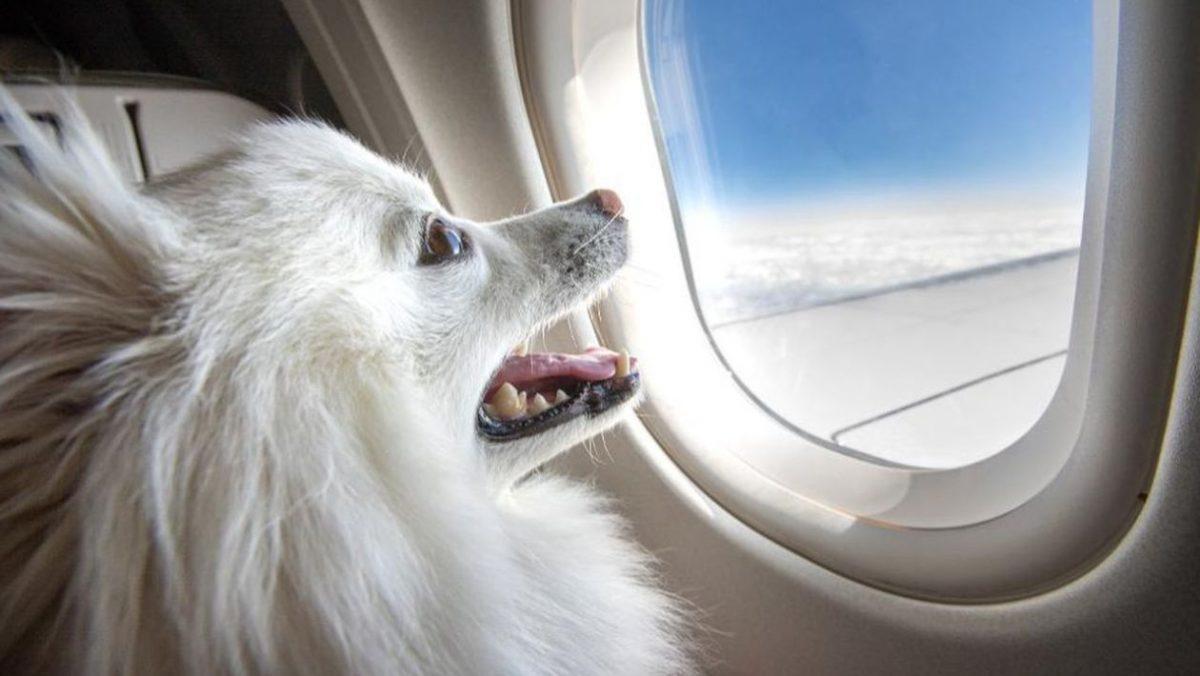 Delta Animais cachorro