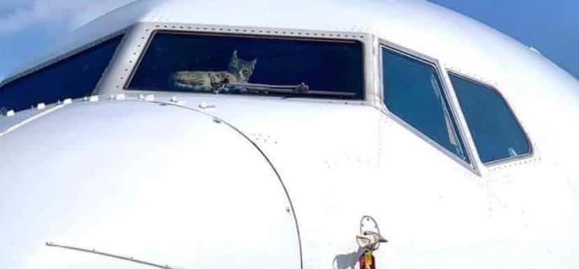 Avião do gato