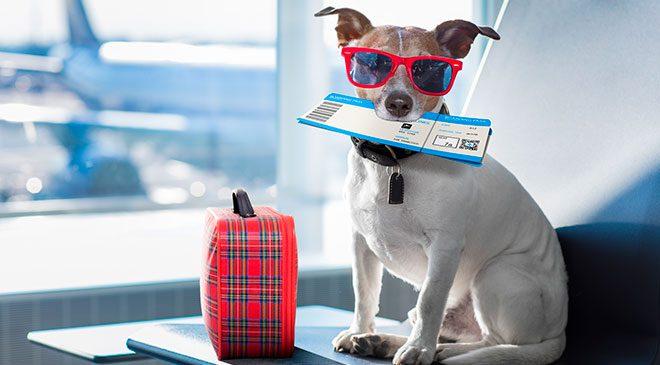 Cachorro voo animal de estimação